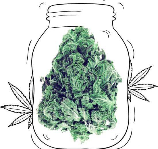 cannabis_01-550x550